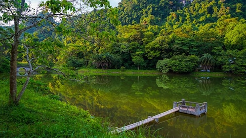 Forest area of park, with pond of water and small viewing dock.