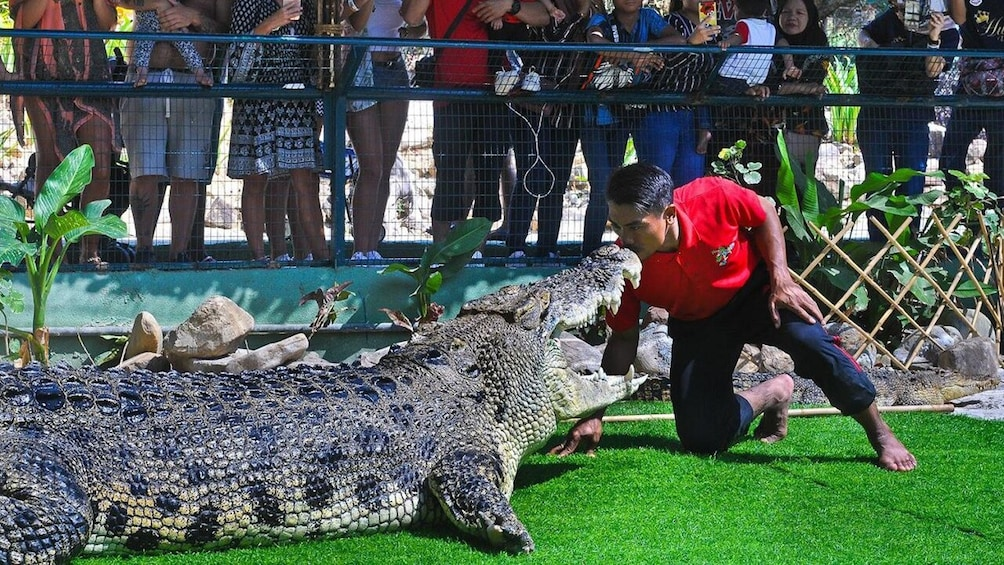 Show item 3 of 9. Private Crocodile Farm & Underwater World Tour