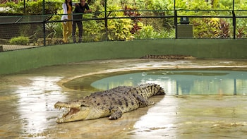 Private Crocodile Farm & Underwater World Tour