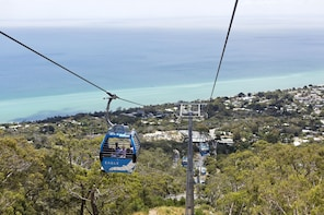 Mornington Peninsula Scenic Bus Tour With Lunch
