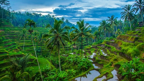 Beautiful green landscape view of Bali rainforest.