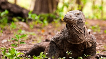 Adventure to 4 Islands for Komodo Dragons and Sunset Sailing