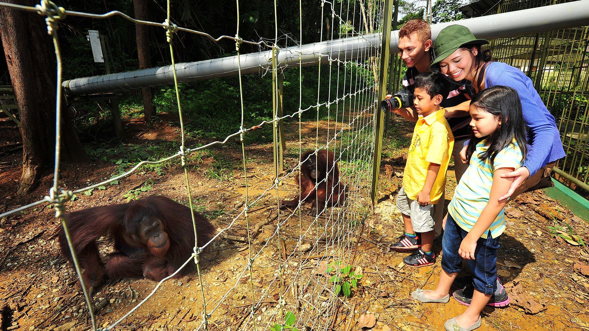 Private Orangutan dan Pabrik Arang dengan Makan Siang