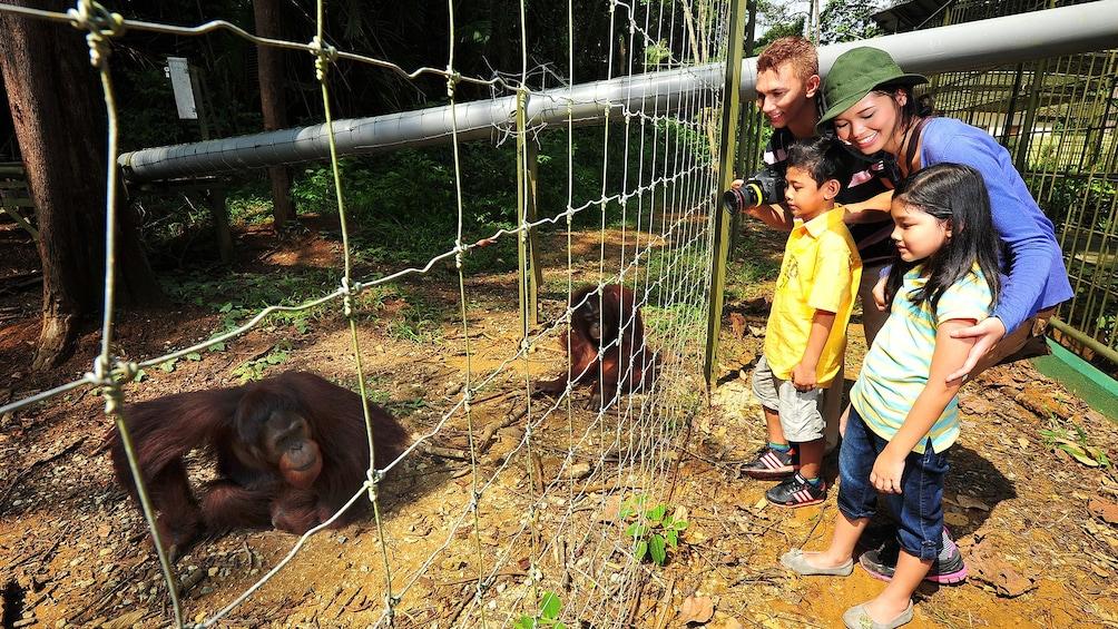Tampilkan item 1 dari 8. Private Orangutan and Charcoal Factory with Lunch
