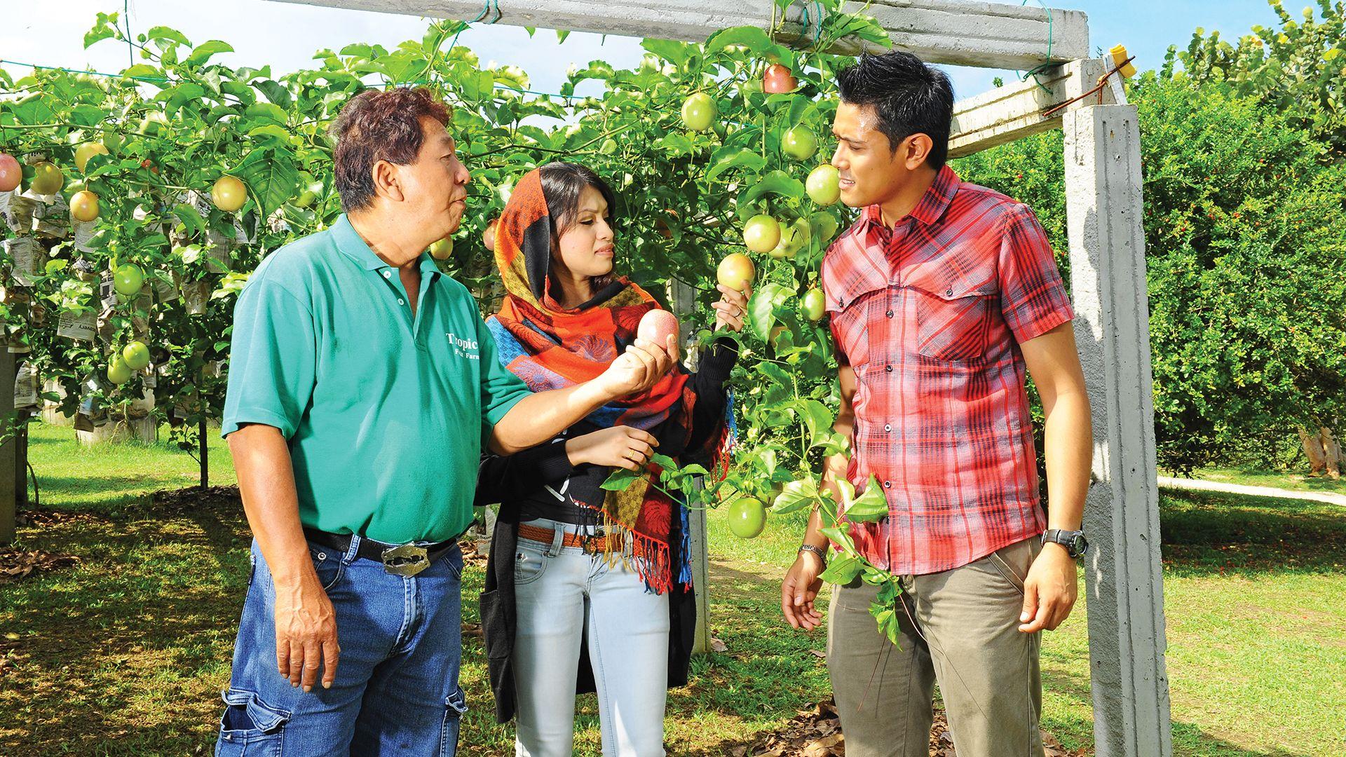 Private Tropical Fruit Farm Tour