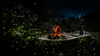Private Fireflies Night Excursion with Dinner