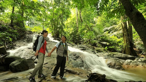 Private Rainforest & Canopy Walk Tour