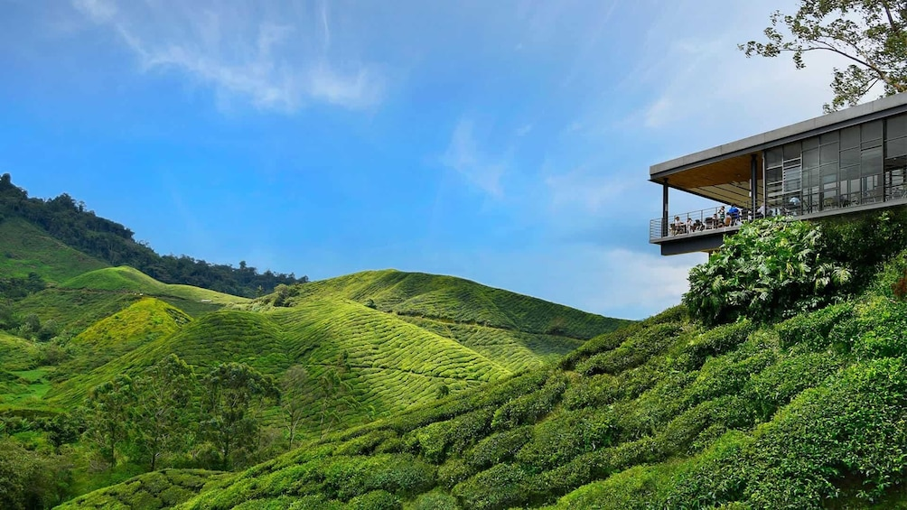 Show item 5 of 8. Private 2-Day Cameron Highlands Tour from Kuala Lumpur
