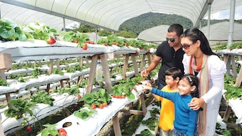 Private 2-Day Cameron Highlands (ending Penang)