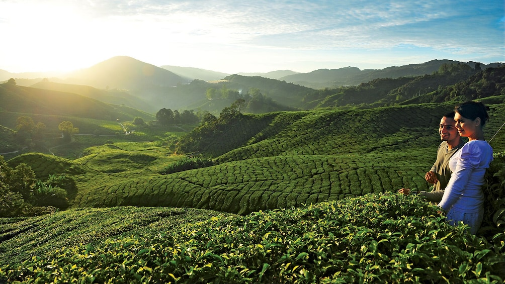Show item 1 of 8. Private 2-Day Cameron Highlands (ending Penang)