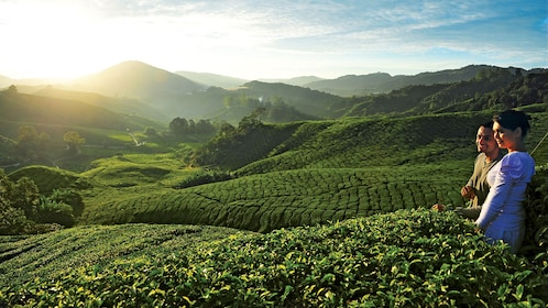 cameron-highlands-tea-plantation-1.jpg