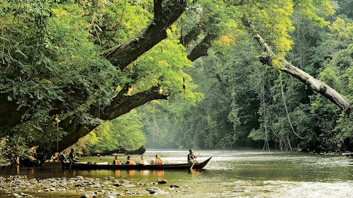 Private 3-Day Taman Negara Excursion