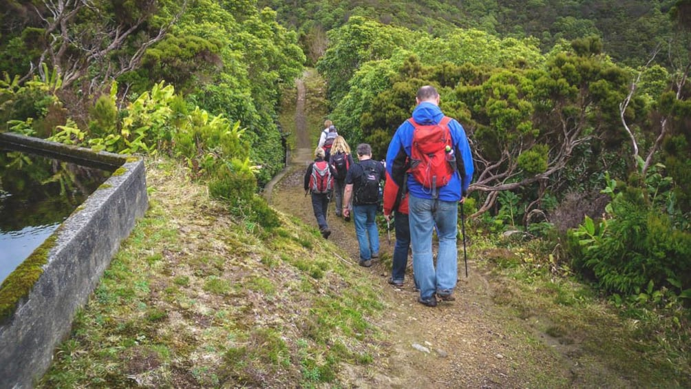 Group of people hiking down forest trail.