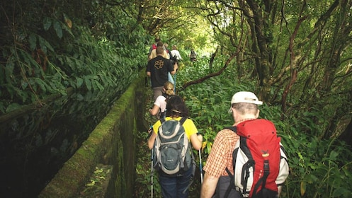 Group of people hiking down forest trail surrounded by trees.