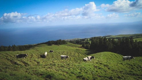 Aerial view of grassy area with cows eating.