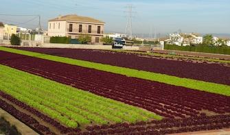 Valencias frukthage: paella-lunsj og landlige aktiviteter