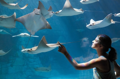 Woman touches the glass of the sea ray exhibit