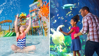 SeaWorld Florida Theme Parks Tickets