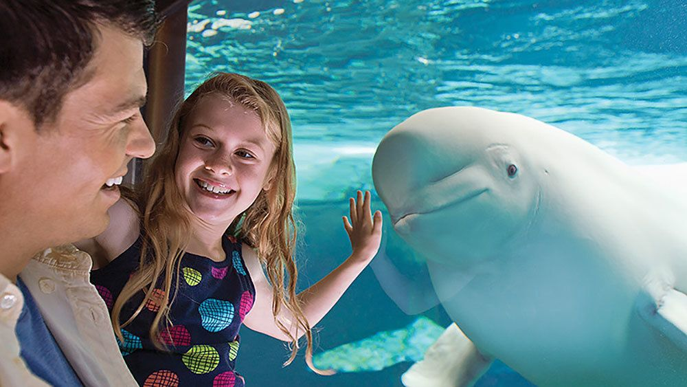 Father and daughter look at Beluga whale in Orlando