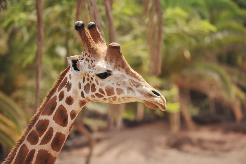 Oasis Wildlife Fuerteventura