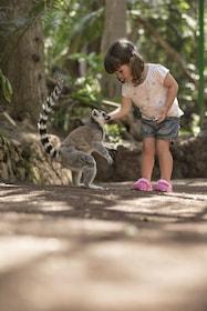 Lemures - Oasis Park Fuerteventura.JPG