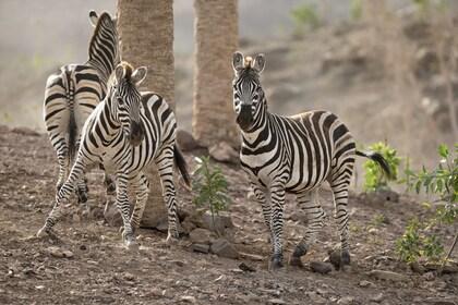 Cebras - Oasis Park Fuerteventura.JPG