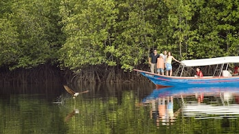 Mangrove Forest & Eagle Watching