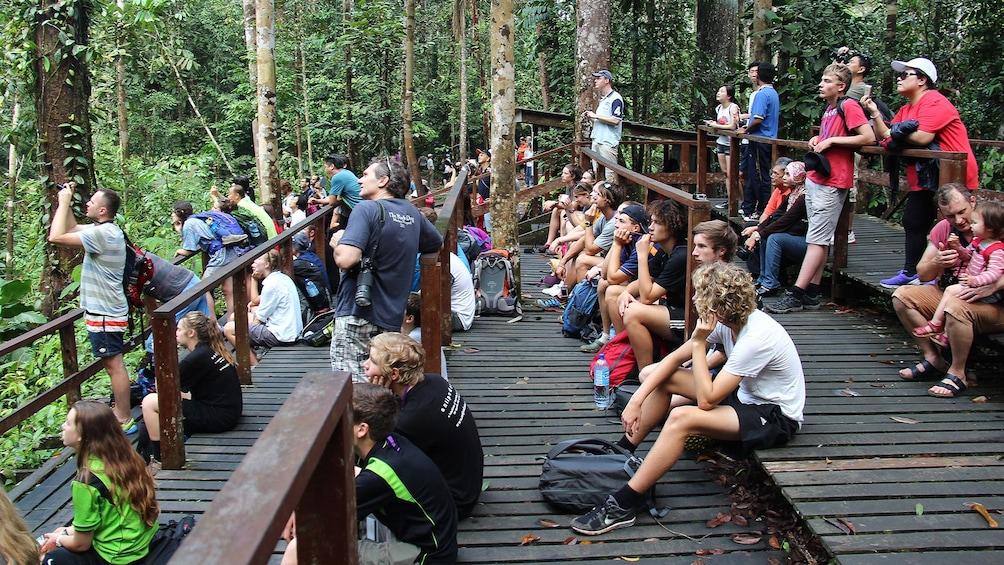 Show item 4 of 5. Private Semenggok Wildlife Rehab Center Tour
