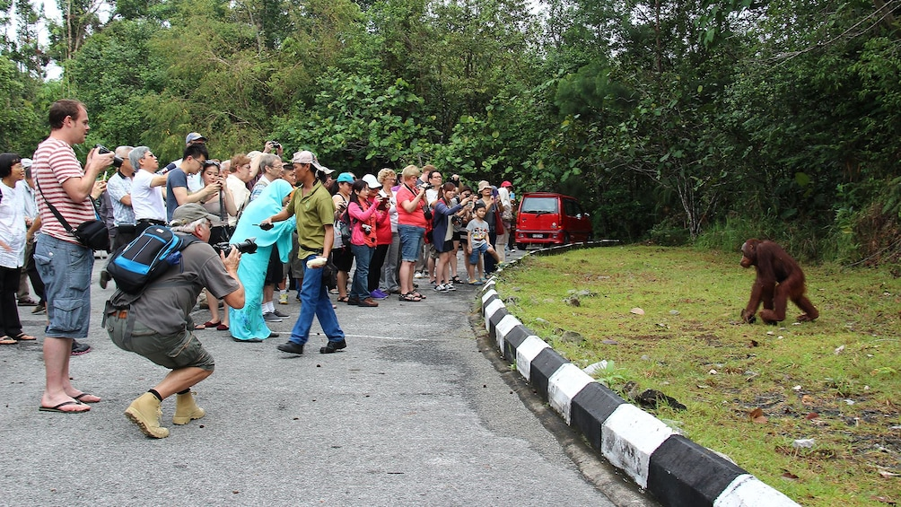 Show item 2 of 5. Private Semenggok Wildlife Rehab Center Tour