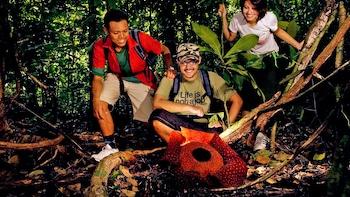 Private Rafflesia Safari with Lunch