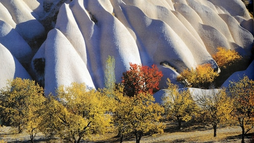 Trees at the base of curved rock formations in Cappadocia