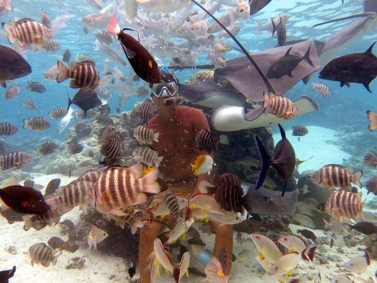 Show item 2 of 5. Snorkeling Tour at  Moorea Lagoonarium