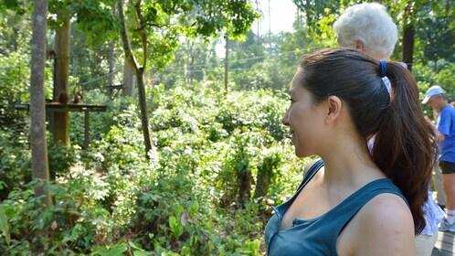 Tour group watching orangutans in Kota Kinabalu