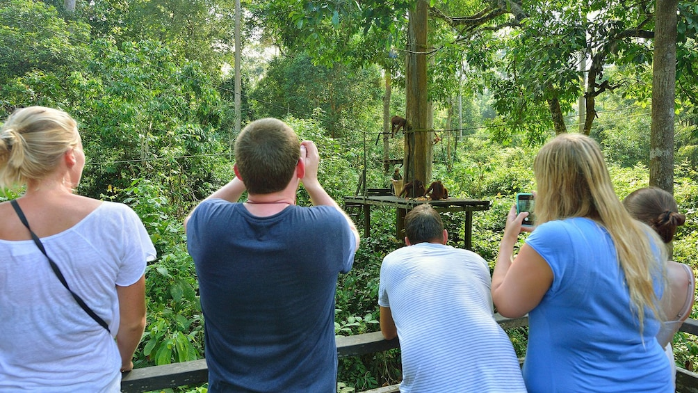 Show item 5 of 5. Group looking at orangutans in Kota Kinabalu