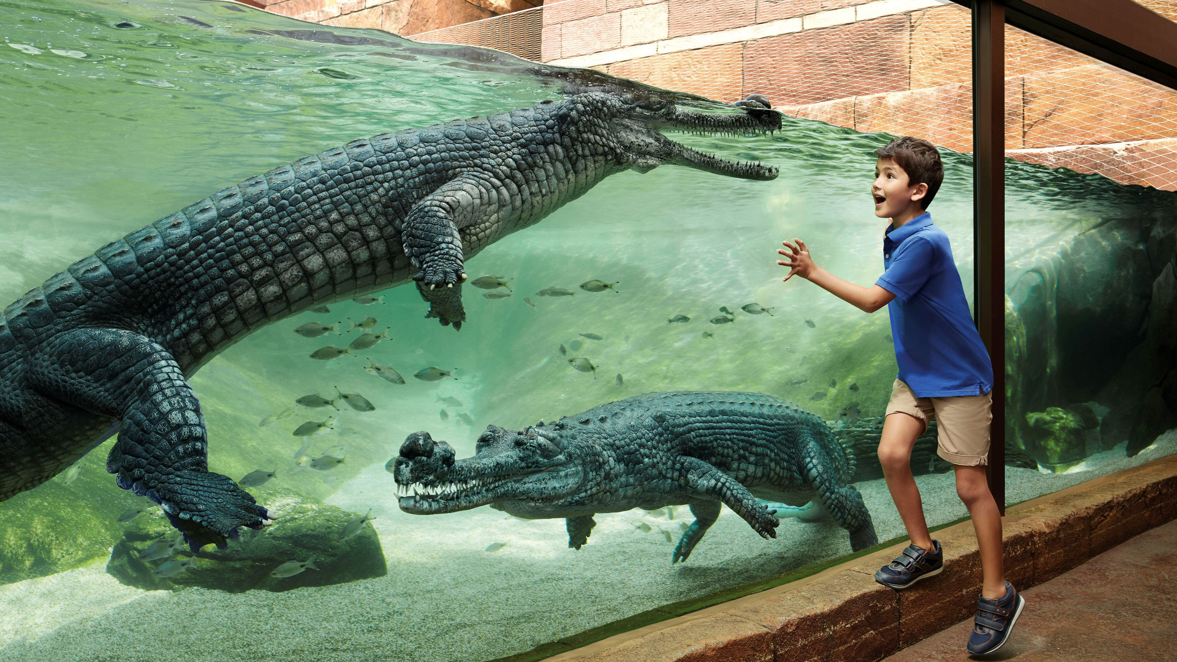 Young boy looking at alligators in a tank