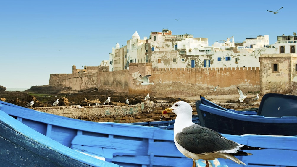 The view from a boat on the water with seagulls on a boat looking up to an old structure in Essaouira, Morocco