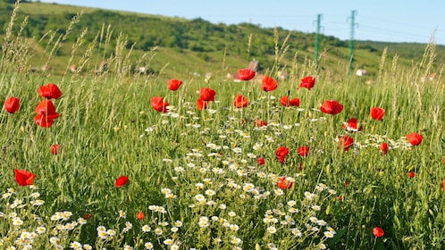 wild flowers flourishing on a field in Budapest