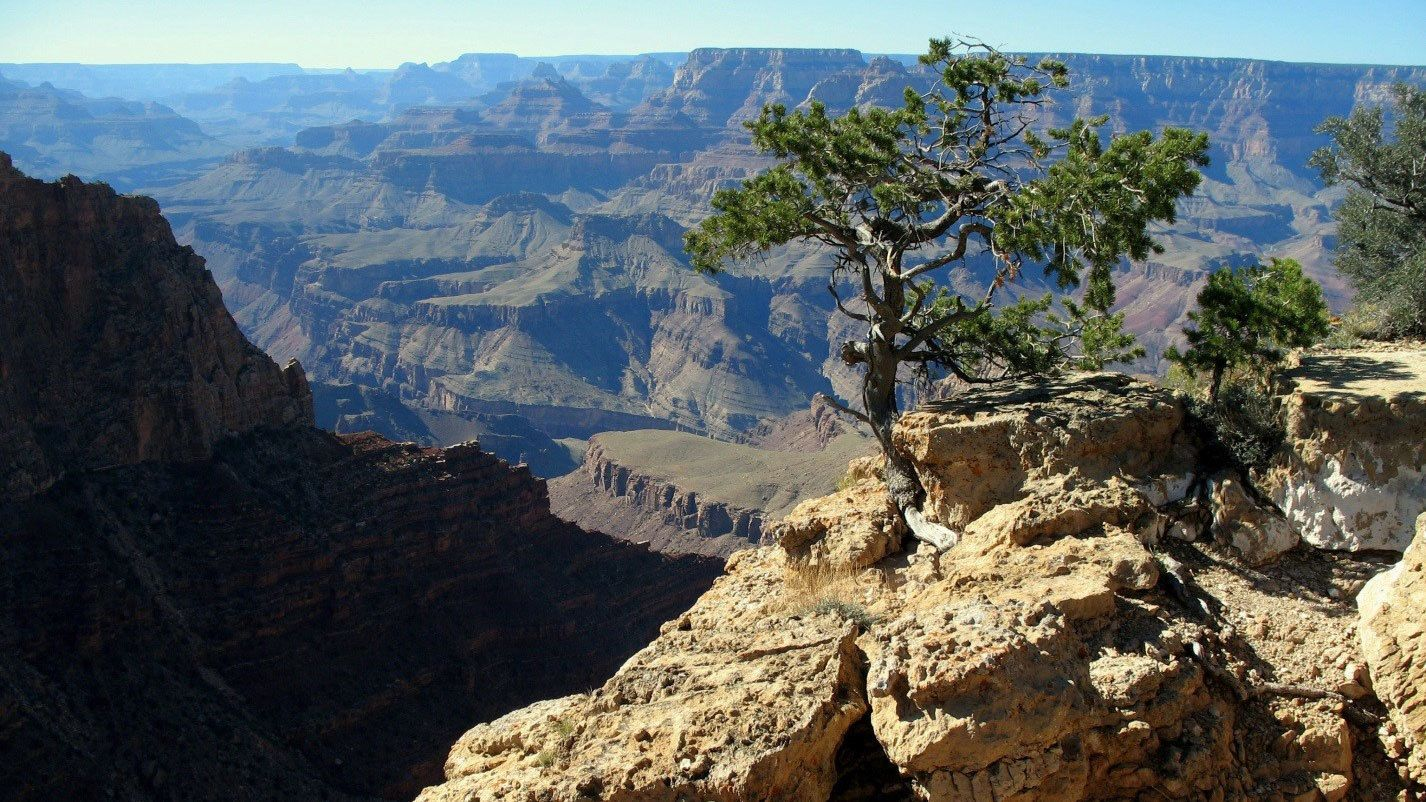 Tree on a cliff overlooking the Grand Canyon