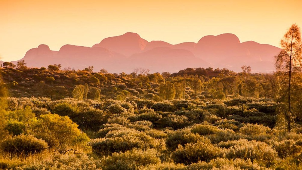 Show item 2 of 5. Stunning panoramic sunset view of Alice Springs
