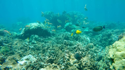 Fish and coral reef in Maui