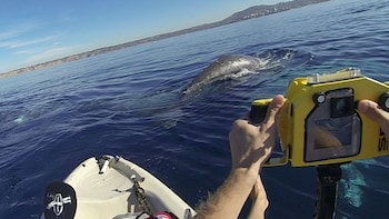 2-Hour Whale-Watching Kayak Excursion