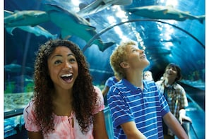 SeaWorld San Diego Theme Park Billetter
