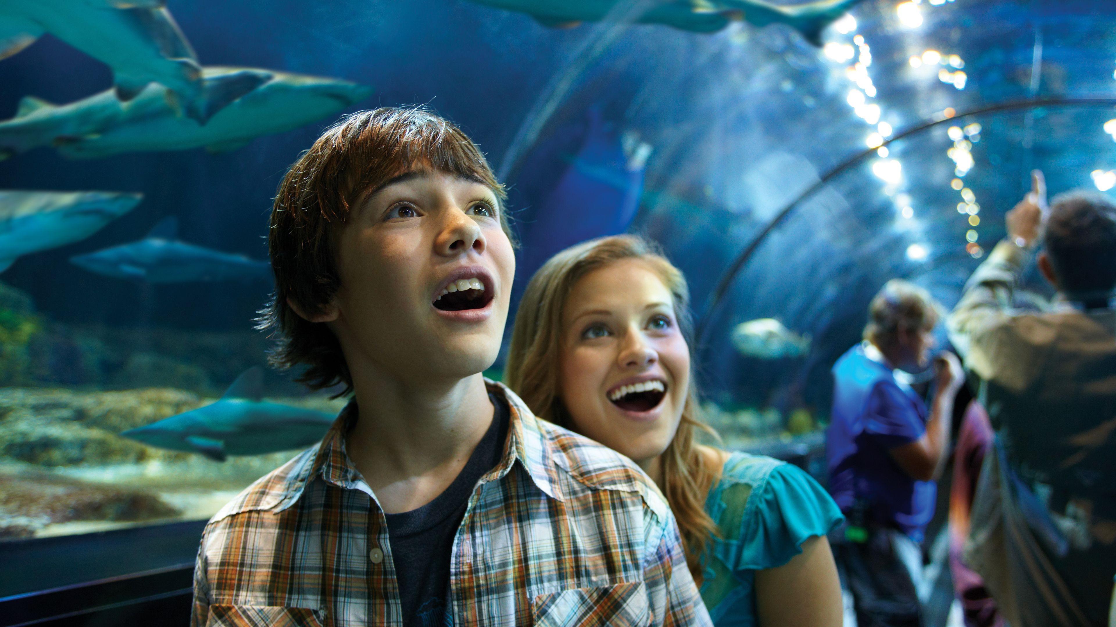 """SeaWorld San Diego - Ingresso """"salta la fila"""""""