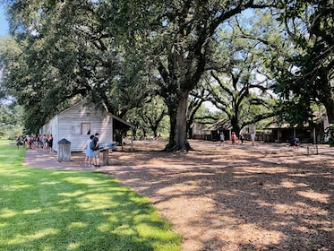 Oak Alley Plantation w/ Transportation from New Orleans