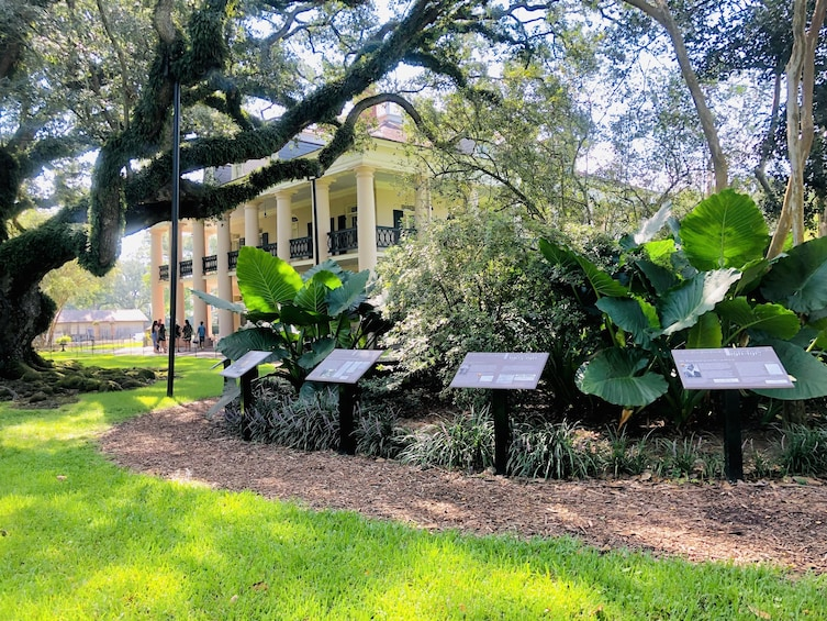 Show item 2 of 10. Oak Alley Plantation w/ Transportation from New Orleans