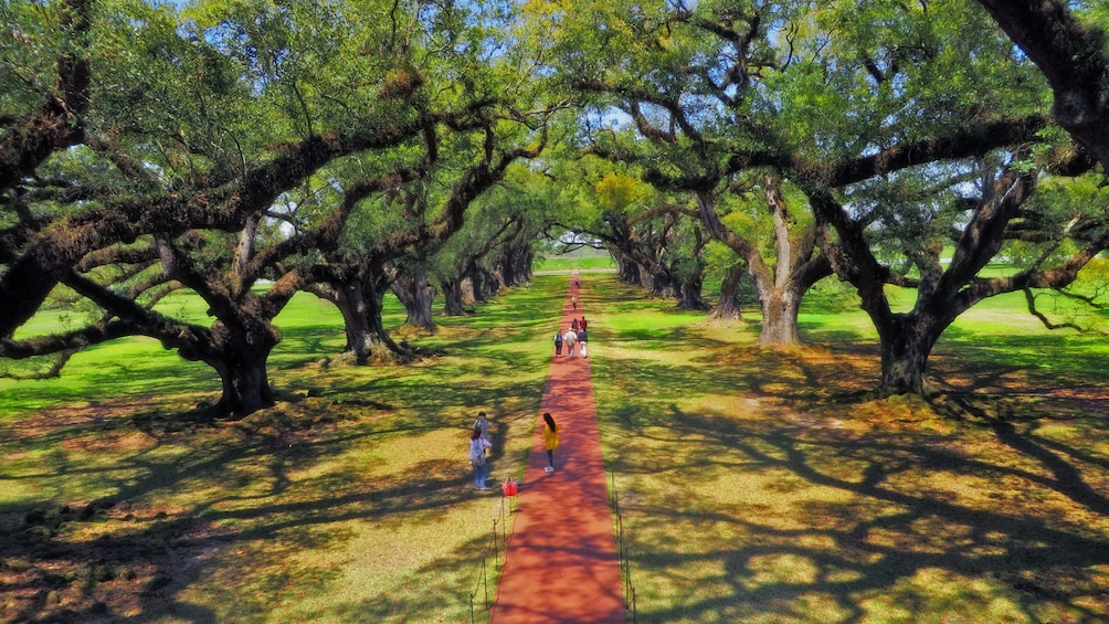 Show item 4 of 10. walking path on plantation in new orleans