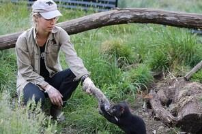 1-Hour Tasmanian Devil Feeding Day Tour at Cradle Mountain