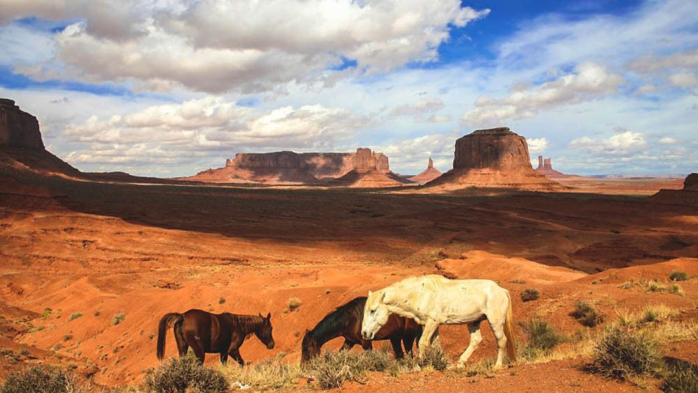 Landscape view of Monument Valley with several horses.