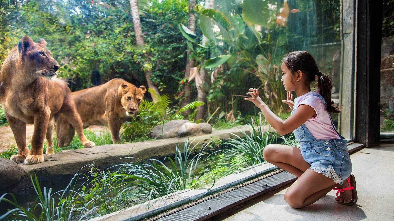 Tiket Masuk ke Kebun Binatang Bali