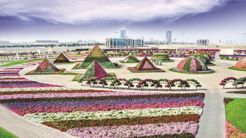 Show item 2 of 8. Flora & Fauna tour from Dubai with Gray Line